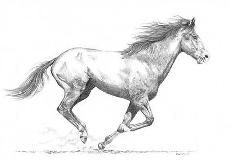 Guide du cavalier et passage des galops - Dessins de chevaux facile ...